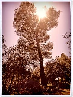 Parc du Vinaigrier, departemental, nice, villefranche sur mer, st jean cap ferrat, verdure, pin, calme, randonnée, sentiers