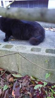 大きな黒い猫が座っている様子