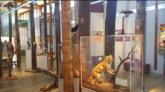 Inside Pilliga Forest Discovery Centre with animals in showcases and on stands
