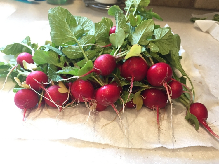 Spring radishes from the garden // Zone 6 & 7 Garden Tasks for May // www.thejoyblog.net