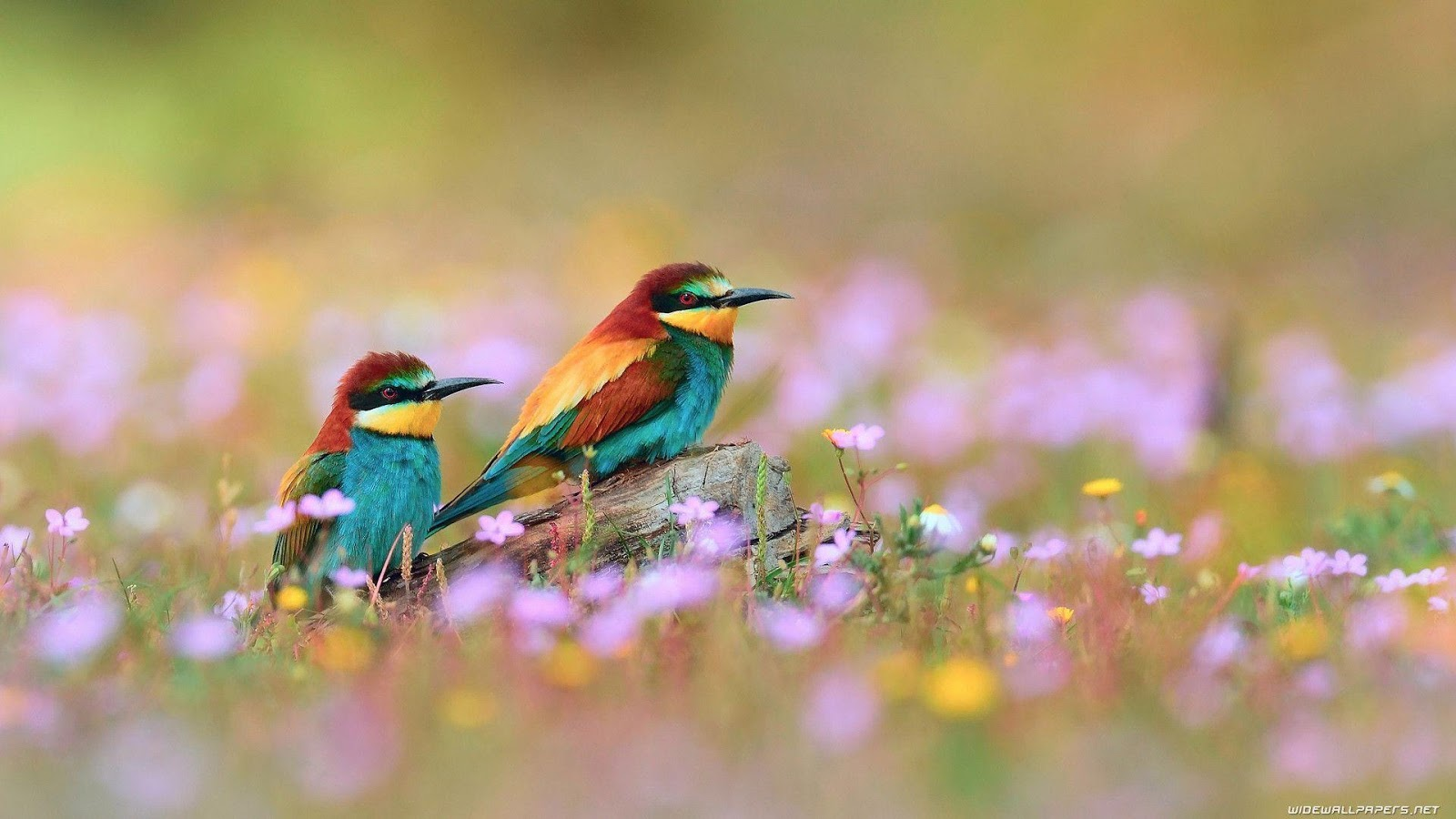 A selection of  Image of Birds in HD quality