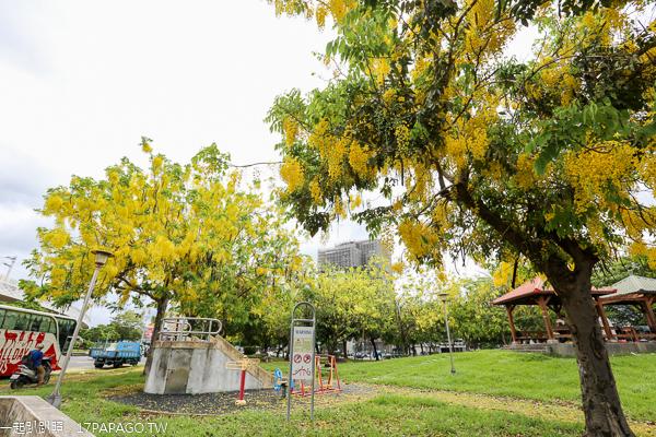 台中東區|旱溪媽祖公園|祖聖公園|阿勃勒|鐵道火車|樂成宮旁