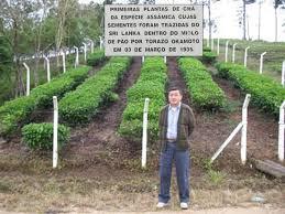 Ricardo Okamoto, neto de Torazo Okamoto. Atrás as primeiras mudas de chá trazidas pelo avô no miolo de pão.