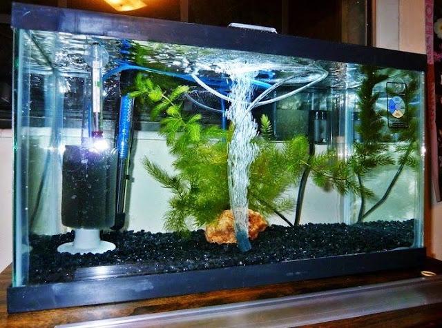 Daftar Harga Filter Aquarium Terbaru