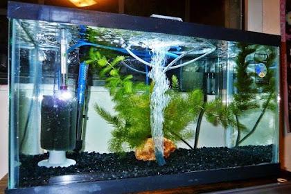 Daftar Harga Filter Aquarium Terbaru 2019