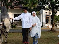 Jokowi Kurban Sapi Ongole Seberat 1 Ton di Kebun Raya Bogor