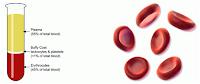 Τι είναι ο αιματοκρίτης;