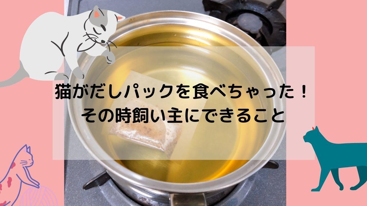 鍋にだしパックが浮いている画像にテキストで「猫がだしパックを食べちゃった!その時飼い主にできること」と表記
