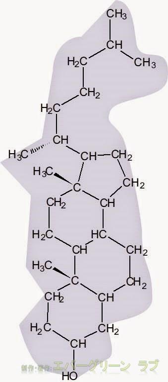 脂肪酸, 脂肪,脂質二重層,コレステロール,グリセロリン脂質,細胞膜,しなやか、いい油、悪い油、両親媒性分子、動脈硬化、高脂血症、脂質異常症、エンドサイト―シス、エキソサイトーシス、スフィンゴ脂質、スフィンゴ糖脂質