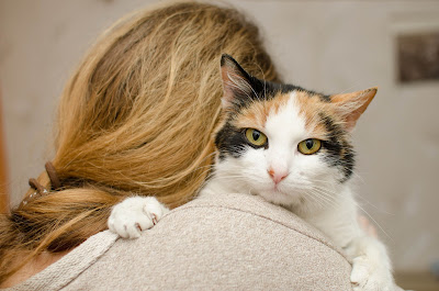 Trudnica i mačka