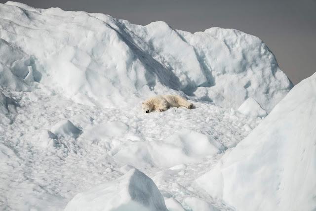 "Baby Polar Bears ""STORIES LIBRARY"""