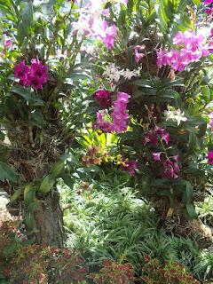 Hoa lan tại Thảo Cầm Viên