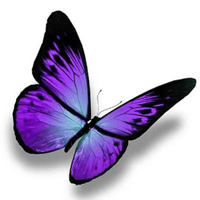 Gambar kupu kupu kartun 3D