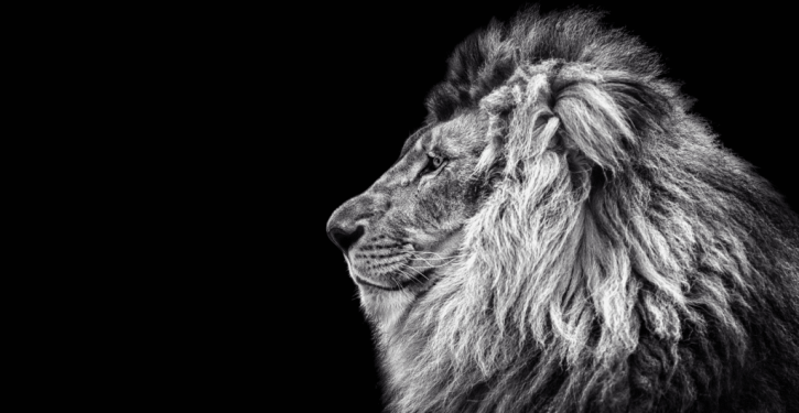 13 Reasons That Make Leo The Best Sign Of The Zodiac