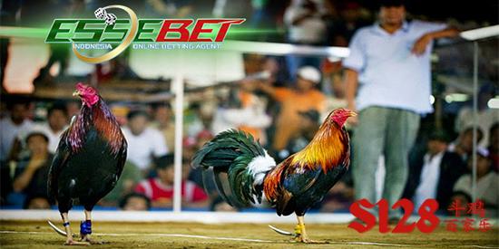 Judi Adu Ayam Online