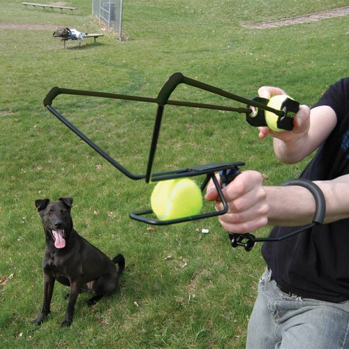 Image Result For Dog Thrown In
