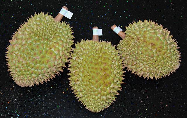 Sầu riêng chín cây nhà trồng tại vườn sinh thái Làng Trường Thọ