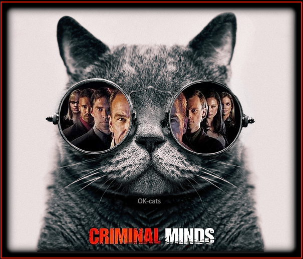 """Photoshopped Cat picture • Criminals minds, FBI cat version. """"The way to a criminal is through his mind."""""""
