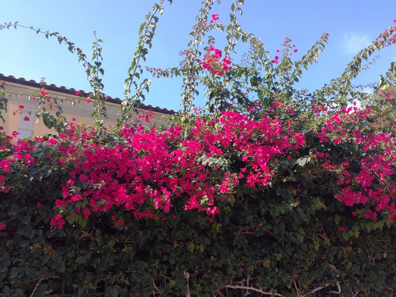 Foto: 30 ottobre fioriture a Maiorca