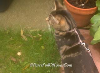 cat  loves grass