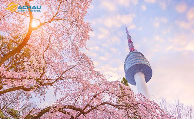 Du lịch Hàn Quốc ngay kẻo lỡ mùa hoa anh đào5