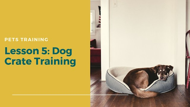 Dog Crate Training in 2020