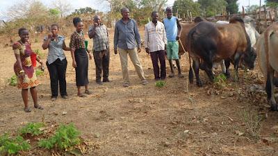 SAM 2156%2B %2BCopy - Ufugaji katika shamba la Rushu Ranchi Kisarawe