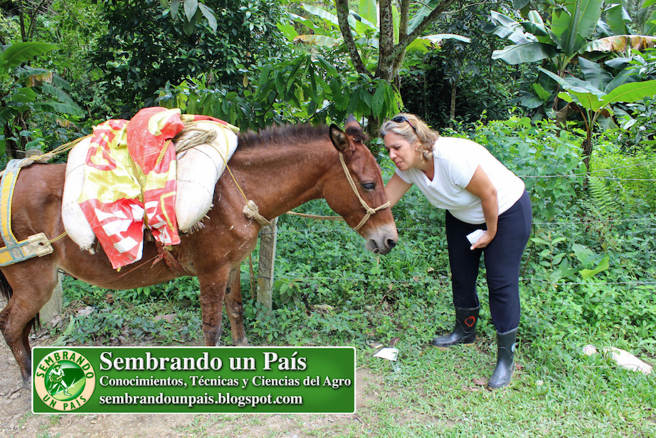 Productora de TV Maria Teresa Afonso