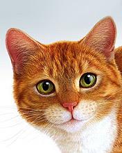 Mačka download besplatne pozadine slike za mobitele