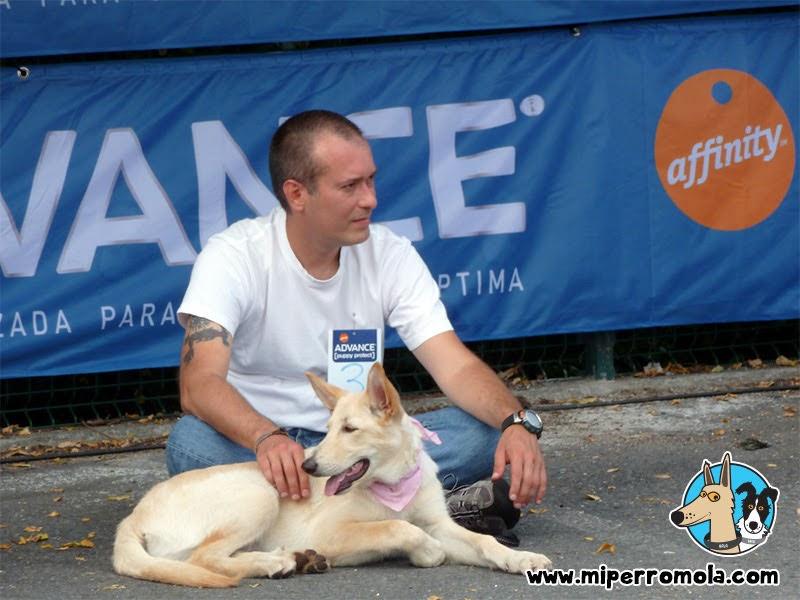 Cachorro Can de Palleiro en desfile canino