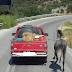 ΚΑΤΑΓΓΕΛΙΑ για παράνομη μεταφορά αλόγου...