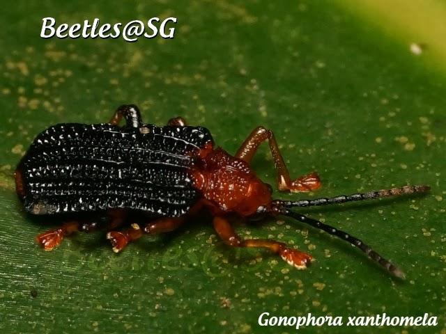 Beetles@SG BLOG: September 2013