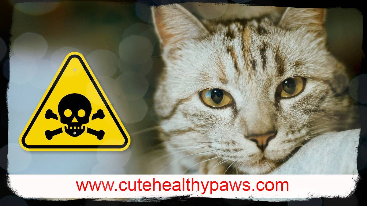 Cat poisoning, symptoms and appropriate treatment methods