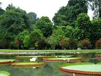 Dua Abad Kebun Raya Bogor akan Berlangsung pada 18-21 Mei 2017