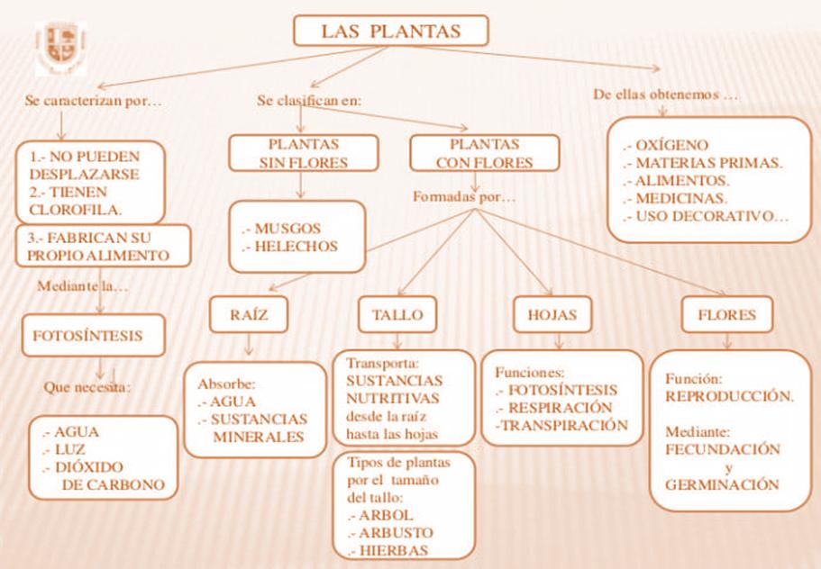 Las Plantas, Mapa conceptual