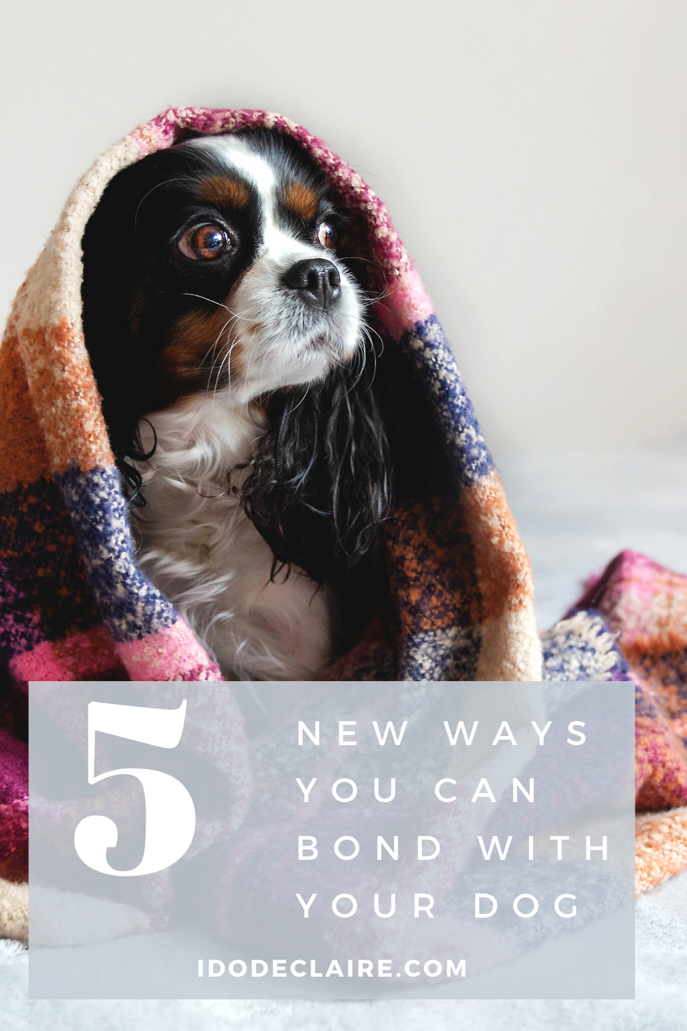 Five New Ways You Can Bond With Your Dog