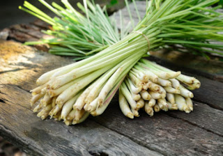 What is Lemon Grass