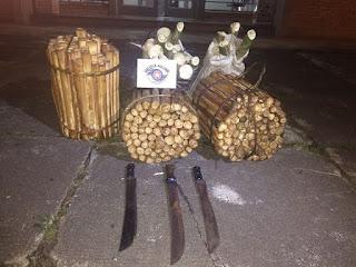 POLÍCIA MILITAR ABORDA VEÍCULO COM CARREGAMENTO DE PALMITO IN NATURA EM CANANÉIA