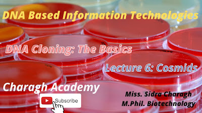 DNA Cloning: The Basics || Cosmids Lecture 6