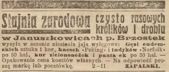 Brzostek stajnia zarodowa 1913