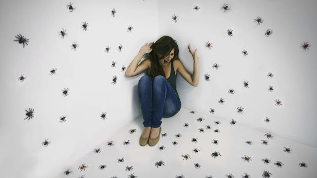 لماذا يخاف البشر من الحشرات؟