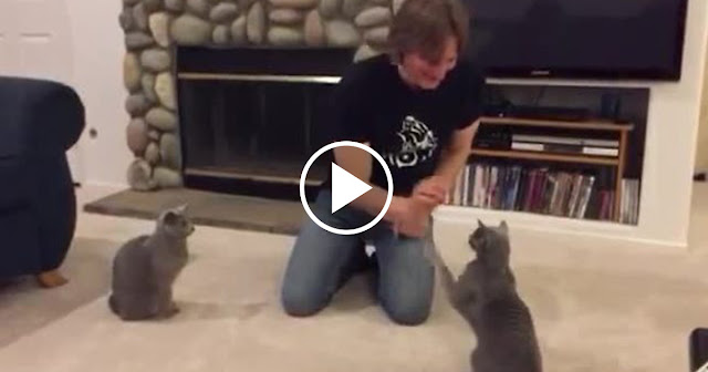 Talented Cats Show Off Array Of Tricks