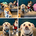 """10+ Times Reddit Users Exclaimed """"What's Wrong With My Dog"""" (PICTURES)"""