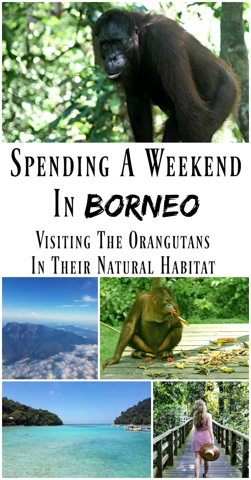 PIN FOR LATER: How to spend a weekend in Sabah, Northern Borneo. Visit Sapi Island in the Marine Park, and see the Orangutans in their natural wild habitat at Sepilok Nature Park.