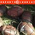Três eventos de futebol americano neste domingo em Jundiaí