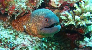 مالا تعرفة عن ثعبان البحر الكهربائي