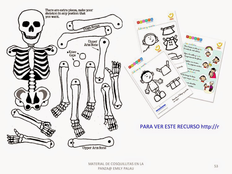 Maestra de Primaria: El cuerpo humano. Esqueletos para montar.