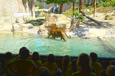 Día del tigre