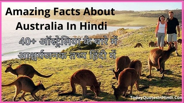What-Is-Australias-National-Animal