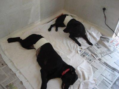 Castração de cães ou gatos: cuidados antes, durante e depois da cirurgia